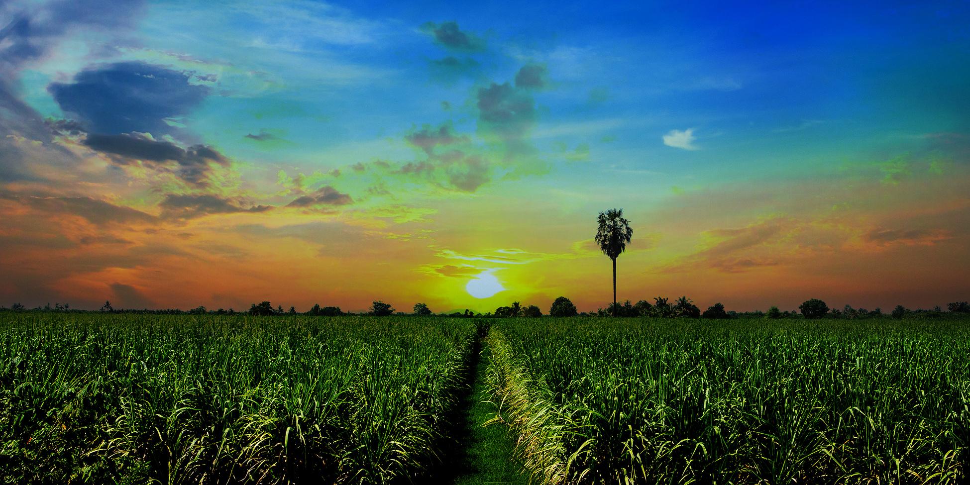 Innovation & Jobs in Belle Glade, FL - R C  HATTON FARMS