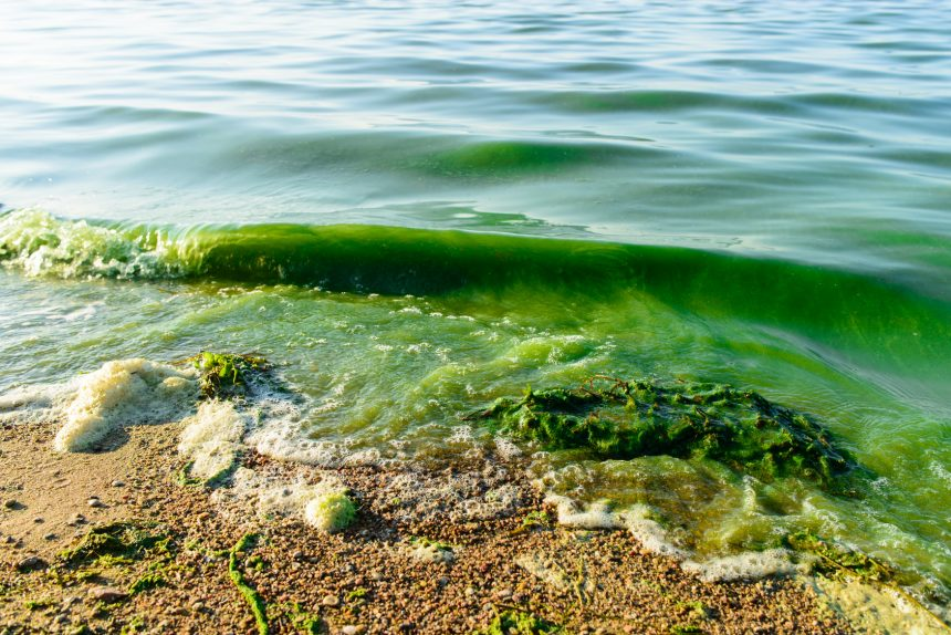 Uncovering Algal Blooms