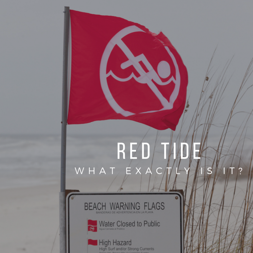 What is Red Tide?