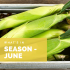What's in Season – June