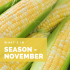 What's in Season – November