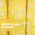 What's in Season – June